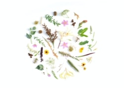 a variety of wild flowers and plants arranged in a circle against a white background